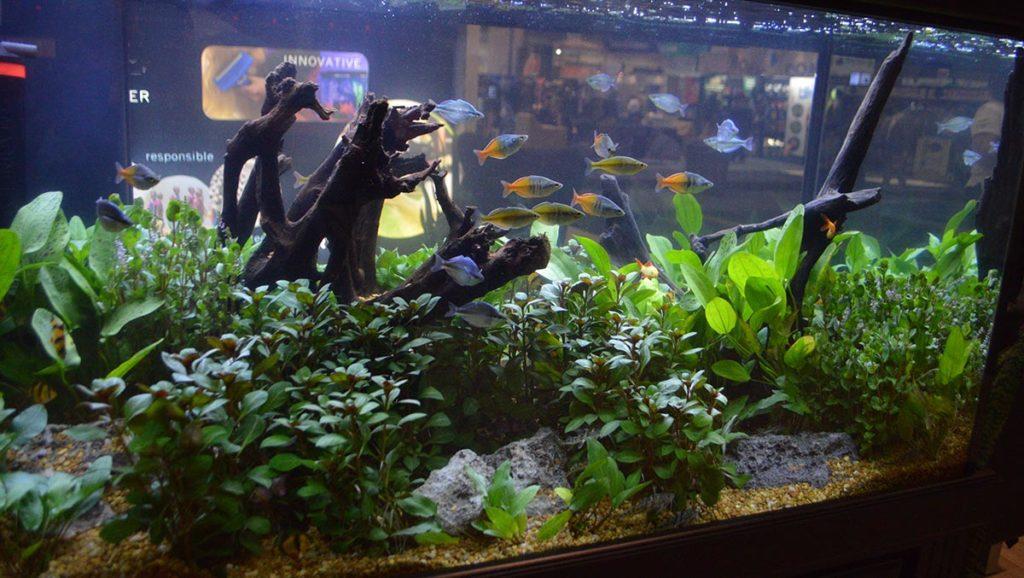 A closer look at the aquarium's interior and inhabitants.