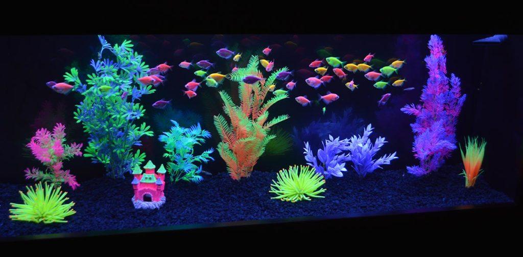 Reef Aquaria Design (RAD) put together this very effective GloFish display.