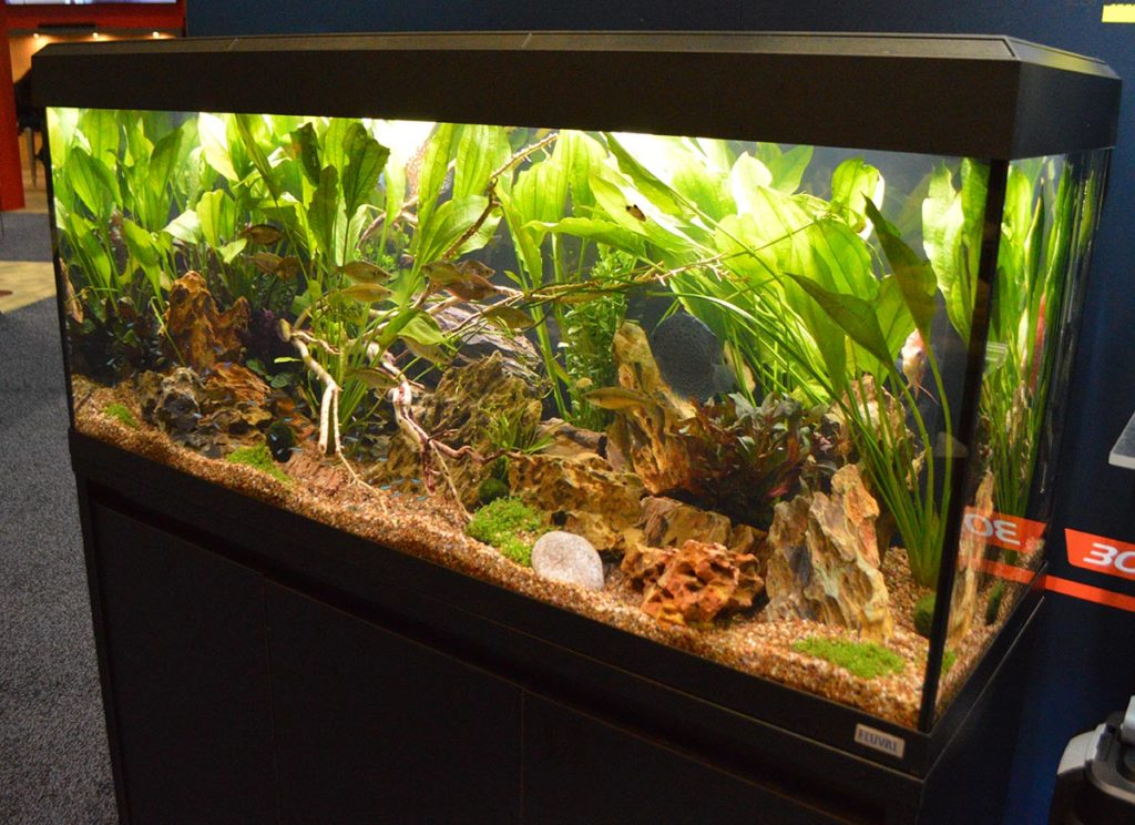 Fluval probably had more aquariums on display than anyone else this year; shown here, the Roma aquarium.