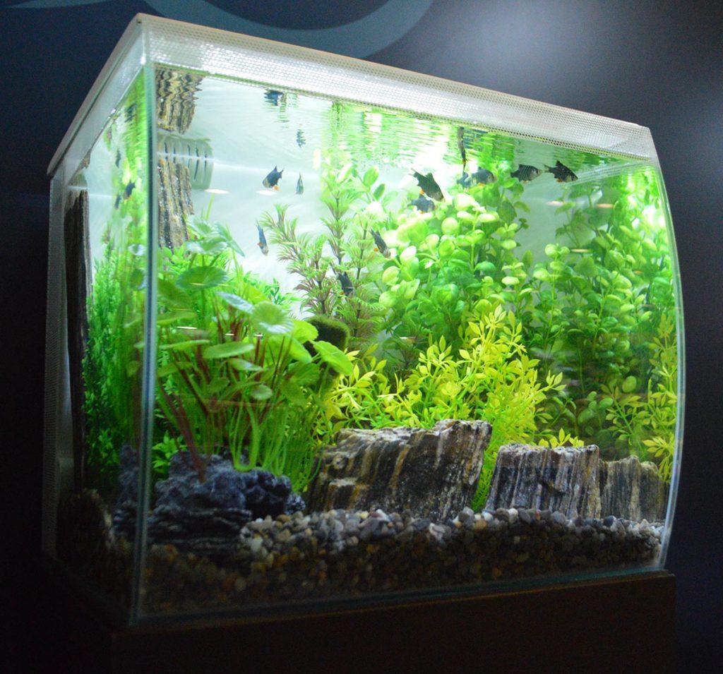 A smaller Fluval Flex aquarium, in white.
