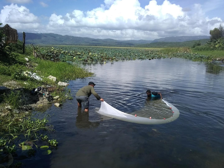 Habitat of L. mandibularis in Lake Miragoâne. Image from Rodriguez-Silva, Torres-Pineda, and Josaphat 2020.