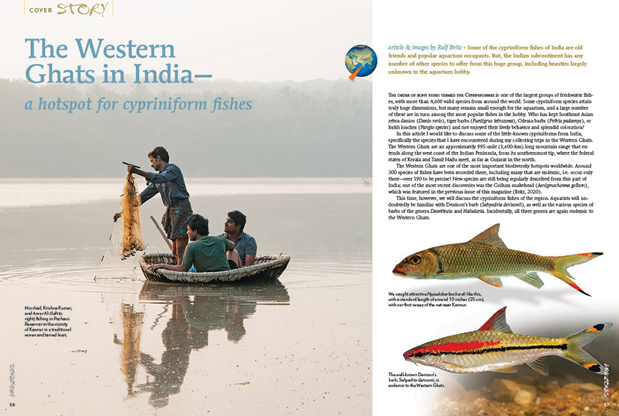 """The Western Ghats in India—a hotspot for cypriniform fishes? So says Ralph Britz, who starts by noting, """"Some of the cypriniform fishes of India are old friends and popular aquarium occupants. But, the Indian subcontinent has any number of other species to offer from this huge group, including beauties largely unknown in the aquarium hobby."""""""