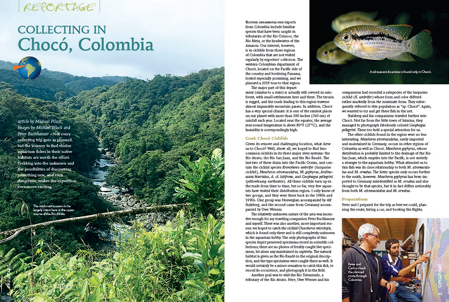 Michael Pilack shares a harrowing tale of exploration and fish collecting in Chocó, Colombia.