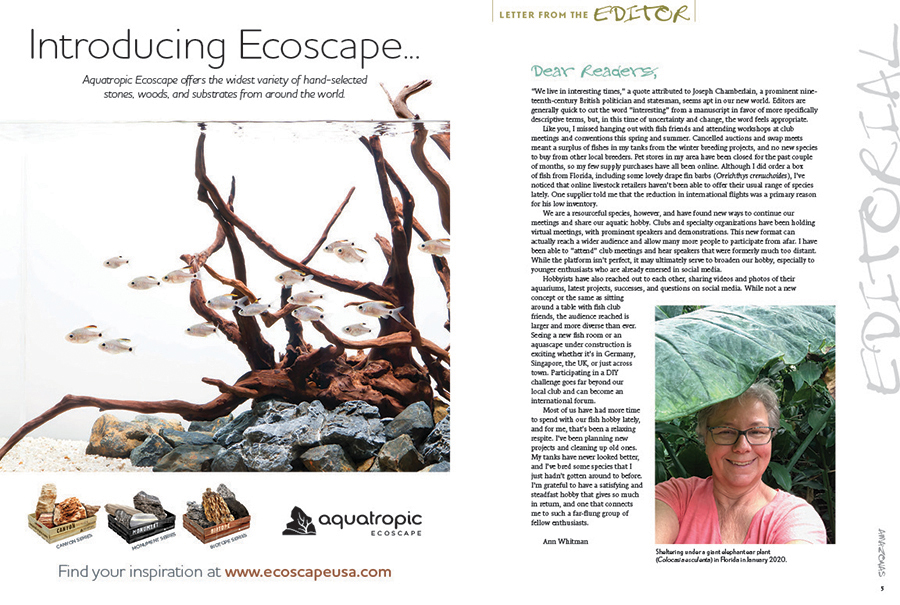 AMAZONAS Executive Editor Ann Whitman reflects on the past months of sheltering in place during the COVID-19 pandemic, and the impact it has had on the aquarium hobby.