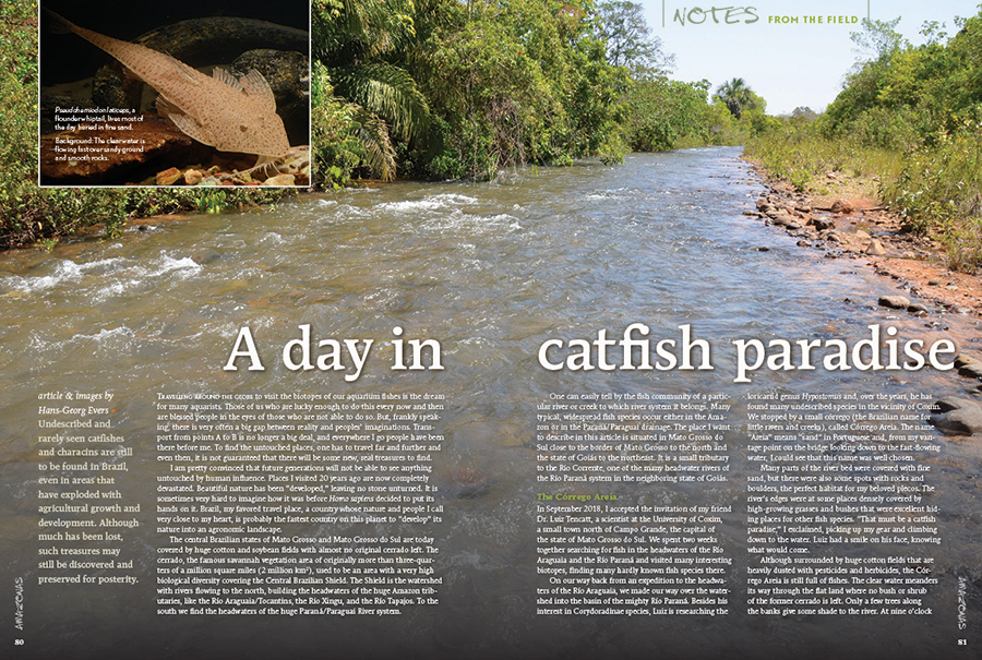 We could all use an escape to spend a day in Catfish Paradise. Hans-Georg Evers will get you there in his latest installment of Notes From The Field, exploring the headwaters of the Río Araguaia and the Río Paraná in the Brazilian state of Mato Grosso do Sul.