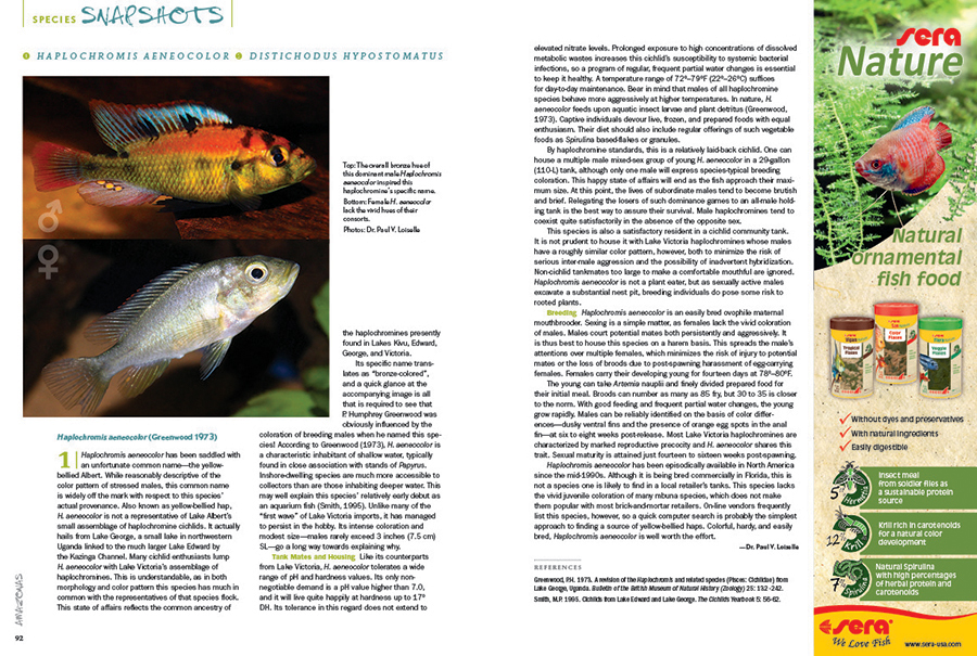 """We round out every issue with AMAZONAS' Species Snapshots—concise glimpses at rare and unusual fishes showing up in the aquarium trade and hobbyist circles. In our latest installment, we give expanded coverage to two very unique species; Dr. Paul V. Loiselle makes the case for the striking """"Victorian-type"""" Haplochromis aeneocolor from Lake George, and Anton Lamboj introduces us to the subtle beauty of a true African rarity, Distichodus hypostomatus."""