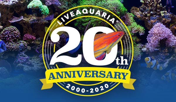 Celebrating its 20th anniversary during July 2020, LiveAquaria is about to enter a new chapter as parent company Petco announces a transition to new ownership for the aquarium livestock company.