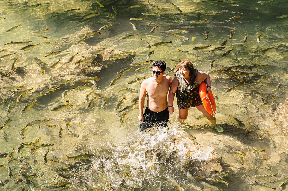 Swim with the fishes! Tourists in a river at Bonito, Mato Grosso do Sul, Brazil, are surrounded by a shoal of Piraputanga fishes, Brycon hilarii. Image credit: Vinicius Bacarin/Shutterstock