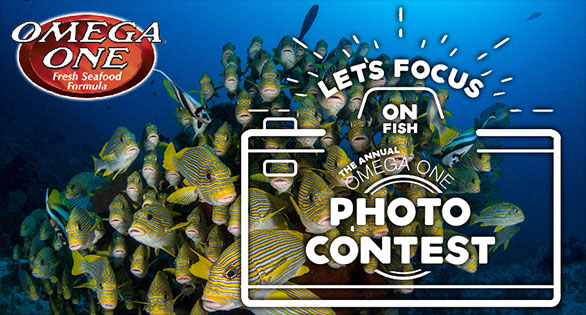 Let's Focus on Fish: Omega Sea's 2020 Photo Contest