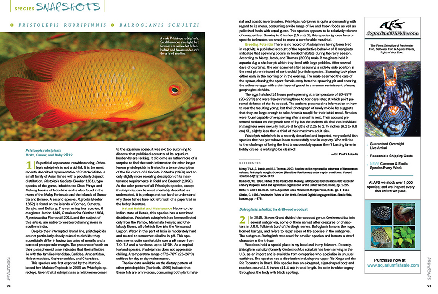 We round out every issue with AMAZONAS' Species Snapshots—concise glimpses at rare and unusual fishes showing up in the aquarium trade and hobbyist circles. In our latest installment, Dr. Paul V. Loiselle introduces the cichlid-like Pristolepis rubripinnis or from India, and Jeremy Basch documents his experiences keeping and breeding Balroglanis schultzi, the driftwood woodcat.