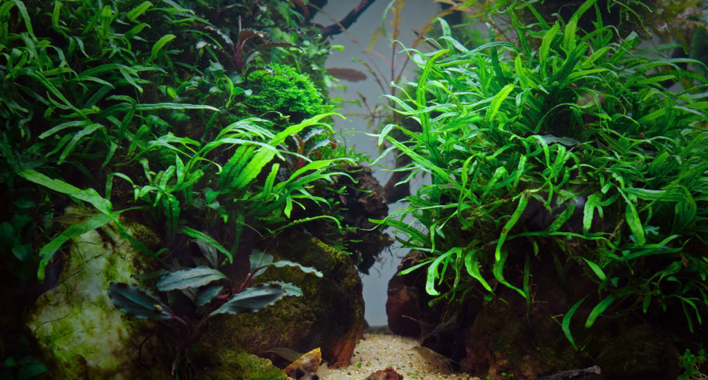 A thriving and lush aquarium can be challenging to create and maintain, but bringing a living work of art into a commercial space is worth all the effort.