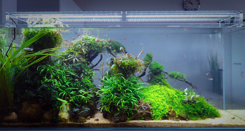 Green Aqua has clearly mastered the task of placing a beautiful planted aquarium into a commercial setting.