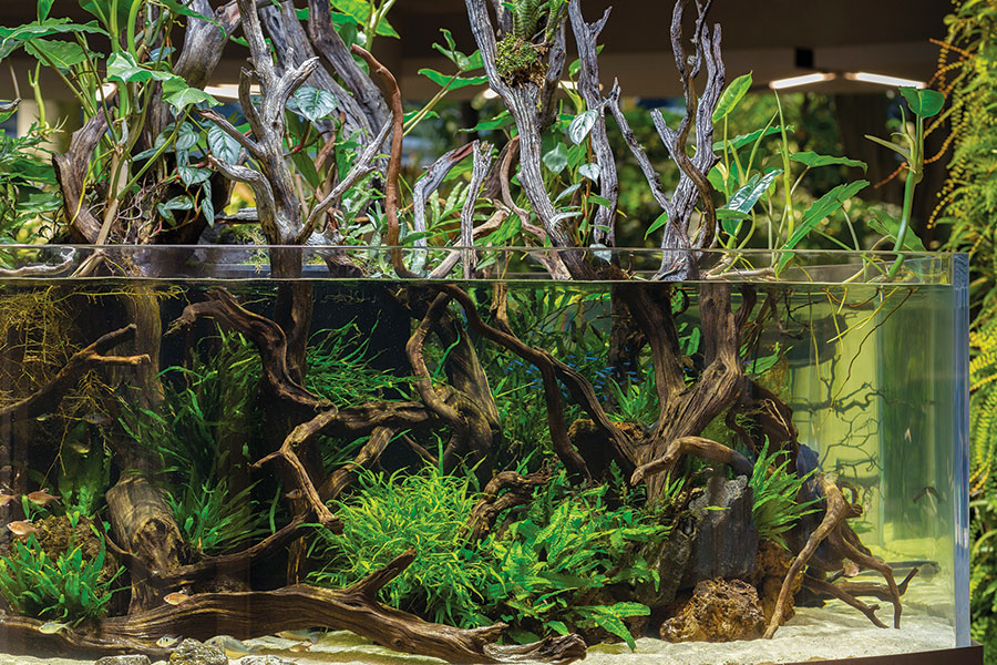 The várzea or flooded forests of the Amazon river basin were the inspiration for this aquascape created for Amazon.com's corporate headquarters. Fish glide through manzanita wood branches below water and tropical epiphytic plants grow profusely above water.