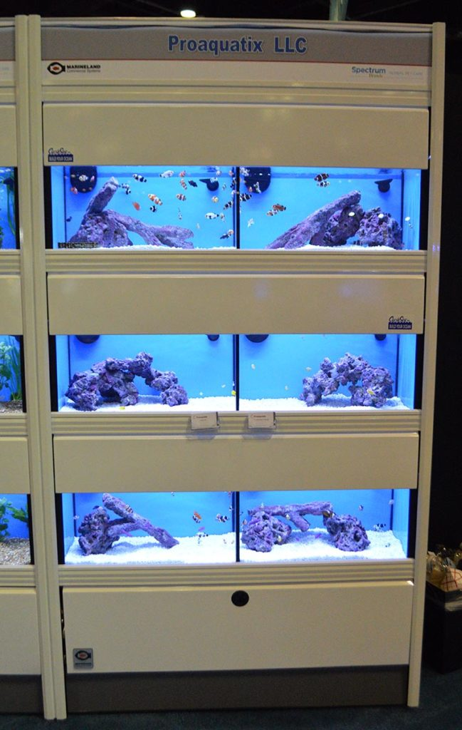 The Proaquatix display at the Global Pet Expo in 2020. Proaquatix distributes the captive-bred marine fish they produce in Vero Beach, FL, to countries around the globe, including the EU and UK.