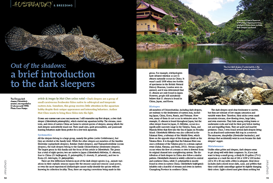 Dark sleepers are a group of small carnivorous freshwater fishes native to subtropical and temperate eastern Asia. Somehow, this group receives little attention in the aquarium hobby despite their unique appearance and interesting behaviors. Author Mat Chen wants to bring these fishes into the light.