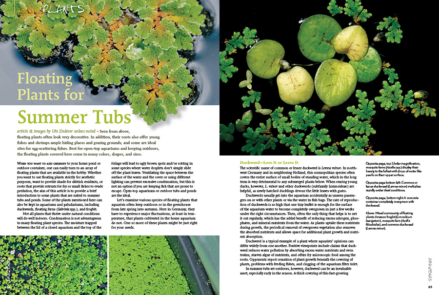 Ute Dederer looks ahead towards summer with a survey of floating plants for open-top aquariums and keeping outdoors.