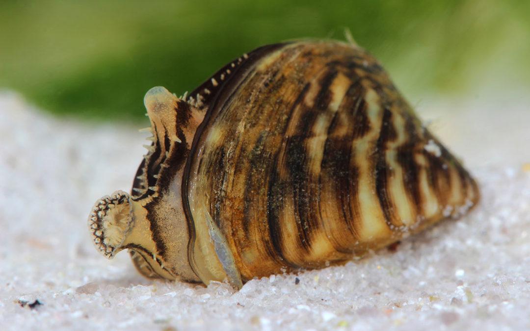 PIJAC UPDATE: Zebra Mussel Problem Growing in Scope