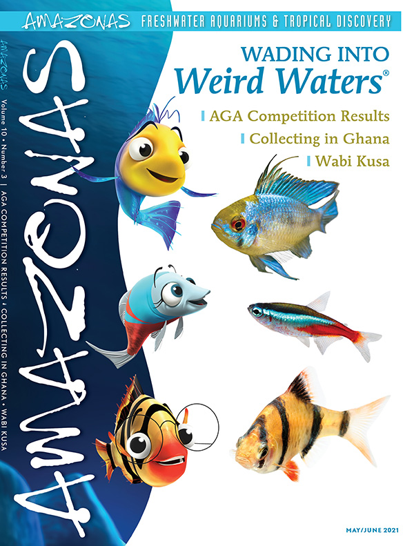 AMAZONAS Magazine, Volume 10, Number 3, WADING INTO WEIRD WATERS, on sale April 6th, 2021! On the cover: The lead cast of Weird Waters®, and their real life inspirations: Electric blue ram cichlid (Mikrogeophagus ramirezi) top (Ian Grainger); neon tetra (Paracheirodon innesi) middle (Mirko Rosenau); and tiger barb (Puntigrus tetrazona) bottom (Napat). Weird Waters® is a trademark of ©Wayletta Productions 2021. All rights reserved.