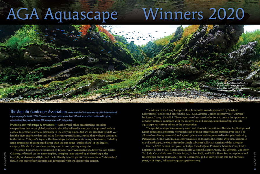The Aquatic Gardeners Association celebrated the 20th anniversary of its #InternationalAquascapingContest in 2020. The contest began with fewer than 100 entries and has continued to grow, culminating this year with over 700 aquascapes in 11 categories.