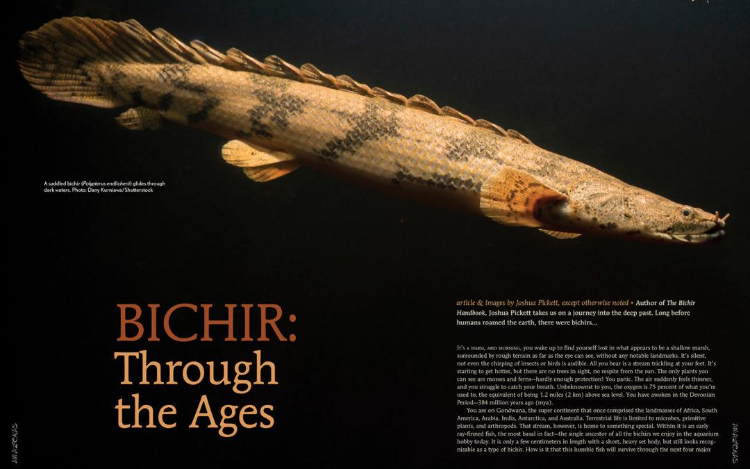 "AMAZONAS Magazine ""FOSSIL FISHES"" Inside Look!"
