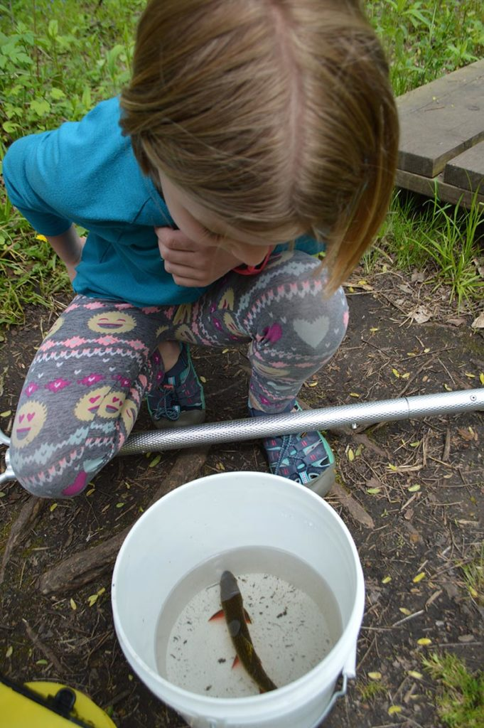 Audrey examines a brook trout, Salvelinus fontinalis, one of two that were slightly inconvenienced during all the darter hunting!
