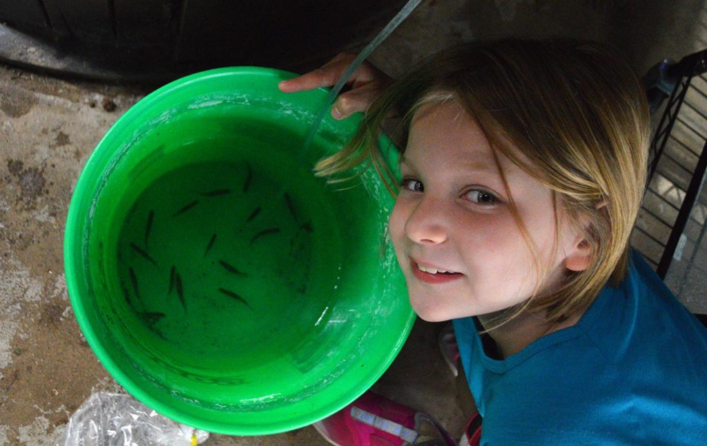 Hours later, Audrey helps acclimate our new fish to their initial holding aquarium.