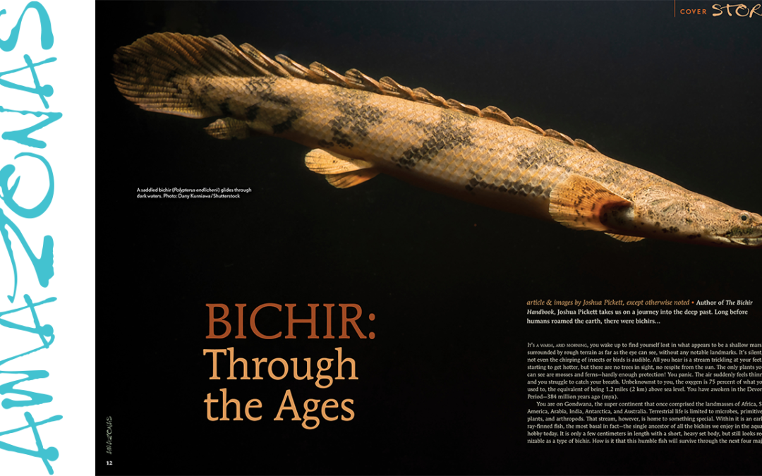 """VIDEO Inside Look: AMAZONAS Magazine """"FOSSIL FISHES"""""""