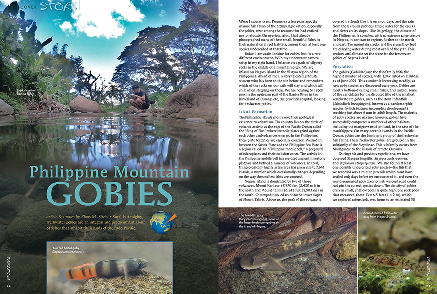 """""""Today, I am again looking for gobies...With my underwater camera setup in my right hand, I balance on a path of slippery rocks in the middle of a mountain creek. We are inland on Negros Island in the Visayas region of the Philippines."""" - Klaus M. Stiefel"""