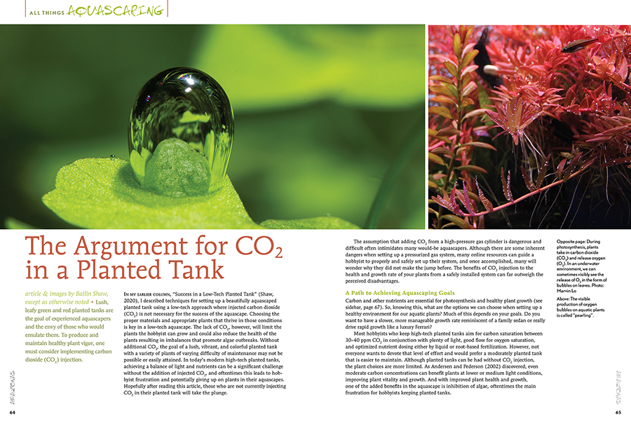 Bailin Shaw doesn't simply think CO2 for planted tanks works, he explains exactly why it's mission-critical for planted aquaria and aquascapes. Plus, he provides a fundamental overview of the available options for carbon dioxide application in your home aquarium.