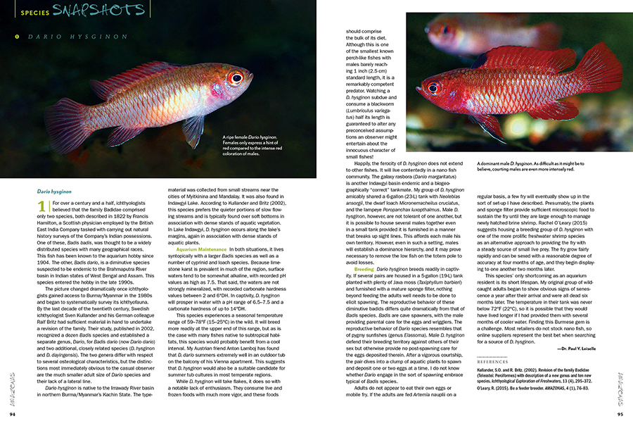 We close out each issue with Species Snapshots, a look at rare and unusual fishes showing up in the aquarium trade and hobbyist circles. In this issue, we take the entire column to focus on one very special fish, the red melon dario (Dario hysginon), shared by Dr. Paul V. Loiselle.