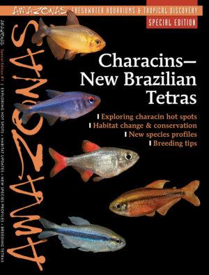 AMAZONAS Special Editions